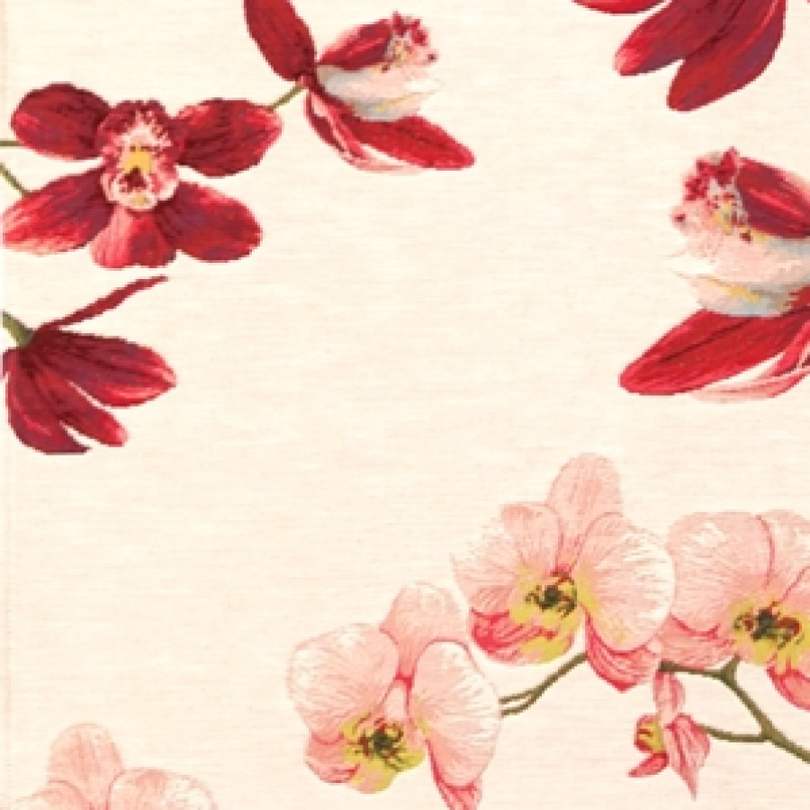 5300B : Pink orchids, white background