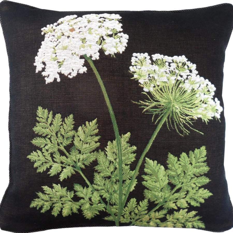2249N : 2 Umbels black background
