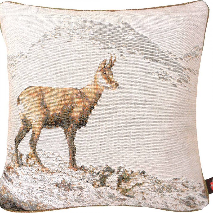 2191B : Chamois in winter, white background