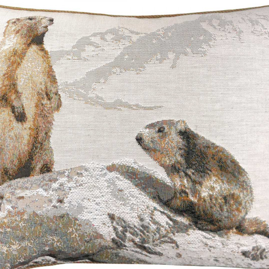 2192B : Marmottes en hiver, fond blanc
