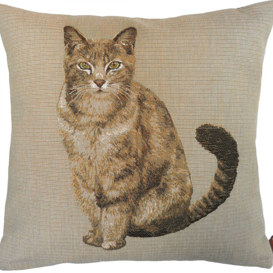 8983C : Tabby cat sitting, light grey background