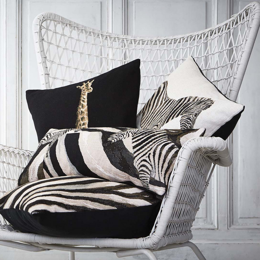 2165N : zebra on white background