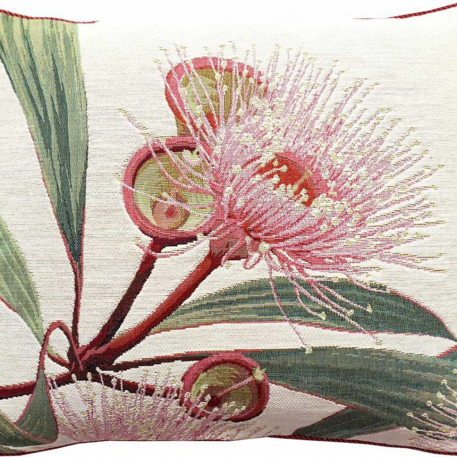 5675B : Grande fleur d'eucalyptus, fond blanc