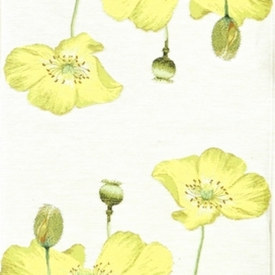 5667B : Pavots jaunes, fond blanc
