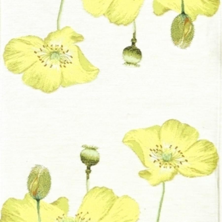 5667B : Yellow poppies, white background