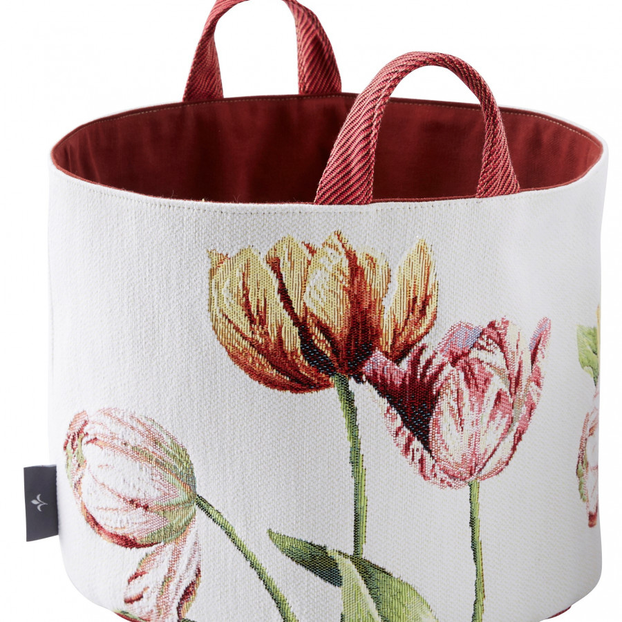 PA5764 : Tulips, white background